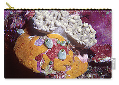 Sponge Head Carry-all Pouch