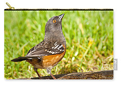 Spotted Towhee Looking Up Carry-all Pouch