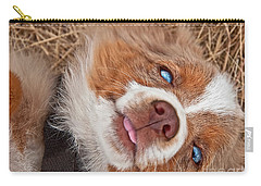 Carry-all Pouch featuring the photograph Sweet Australian Shepherd Puppy Face Art Prints by Valerie Garner