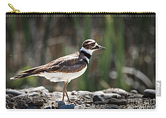 The Killdeer Carry-all Pouch by Robert Bales