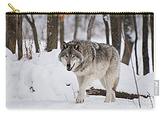 Carry-all Pouch featuring the photograph Timber Wolf In Winter Forest by Wolves Only