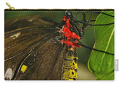 Carry-all Pouch featuring the photograph Troides Helena Butterfly  by Olga Hamilton