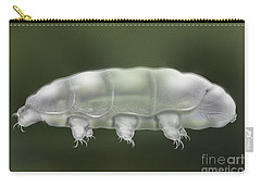 Water Bear Tardigrada - Waterbear Tardigrade  - Scientific Illustration Carry-all Pouch