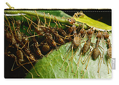 Weaver Ant Group Binding Leaves Carry-all Pouch by Mark Moffett