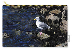 Carry-all Pouch featuring the photograph Western Gull On Rocks by Susan Wiedmann