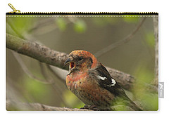 White-winged Crossbill Carry-all Pouch by James Peterson
