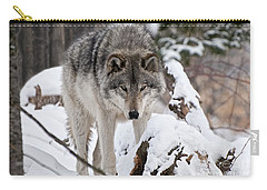 Carry-all Pouch featuring the photograph Winter Timber Wolf by Wolves Only