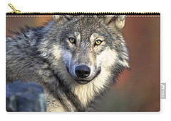 Carry-all Pouch featuring the photograph Wolf Predator Canidae Canis Lupus Hunter by Paul Fearn