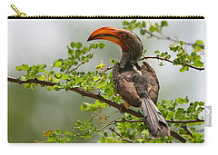 Yellow-billed Hornbill Carry-all Pouch by Bruce J Robinson