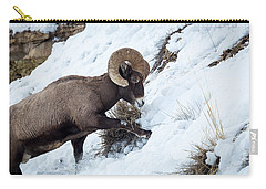 Carry-all Pouch featuring the photograph Yellowstone Bighorn by Michael Chatt