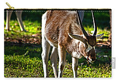 Youngster Addax Carry-all Pouch by Miroslava Jurcik