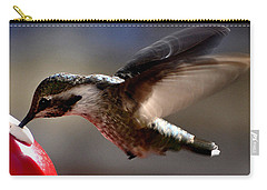 Carry-all Pouch featuring the photograph Young Hummingbird Male Anna by Jay Milo