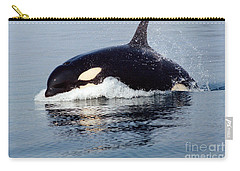 Carry-all Pouch featuring the photograph Young Orca Off The San Juan Islands Washington 1986 by California Views Mr Pat Hathaway Archives