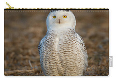 Young Snowy Owl Carry-all Pouch
