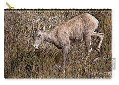 Bighorn Ewe Carry-all Pouch by Ronald Lutz