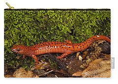Red Salamander Pseudotriton Ruber Carry-all Pouch by Pete Oxford