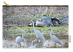 Carry-all Pouch featuring the photograph Alligator Looking For Food by Dan Friend
