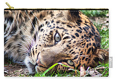 Carry-all Pouch featuring the photograph Amur Leopard by Lynne Jenkins