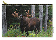 Carry-all Pouch featuring the photograph Bull Moose Flehmen by Doug Lloyd