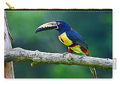 Collared Aracari Carry-all Pouch