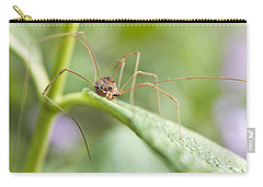 Carry-all Pouch featuring the photograph Creepy Crawly Spider by Jeannette Hunt