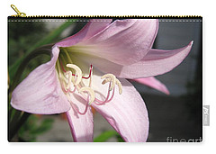 Crinum Lily Named Powellii Carry-all Pouch by J McCombie