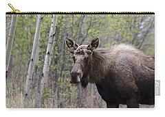 Carry-all Pouch featuring the photograph Early Spring by Doug Lloyd