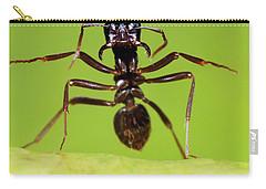 Japanese Slave-making Ant Polyergus Carry-all Pouch by Satoshi Kuribayashi