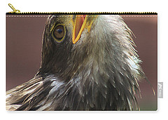 Carry-all Pouch featuring the photograph Juvenile Bald Eagle by Alyce Taylor