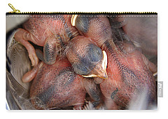 Little Bird Dreams Carry-all Pouch by Bill Pevlor