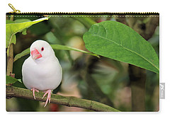 Little White Bird Carry-all Pouch by Rosalie Scanlon