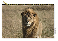 Male Lion's Gaze Carry-all Pouch by Darcy Michaelchuk