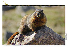 Carry-all Pouch featuring the photograph Morning Marmot by Colleen Coccia