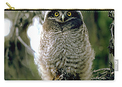 Northern Hawk Owl Fledgeling Carry-all Pouch