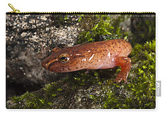 Northern Spring Salamander Gyrinophilus Carry-all Pouch by Pete Oxford