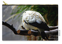 Carry-all Pouch featuring the photograph Pied Imperial Pigeon by Davandra Cribbie