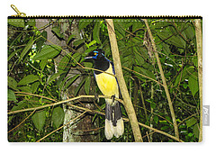 Carry-all Pouch featuring the photograph Plush-crested Jay by David Gleeson