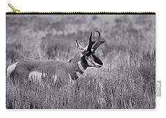 Carry-all Pouch featuring the photograph Pronghorn  by Eric Tressler