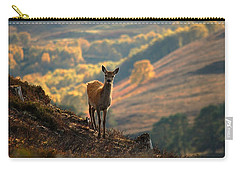 Carry-all Pouch featuring the photograph Red Deer Calf by Gavin Macrae