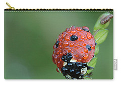 Carry-all Pouch featuring the photograph Seven-spotted Lady Beetle On Grass With Dew by Daniel Reed