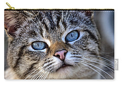 Siamese Feral Cat Carry-all Pouch by Chriss Pagani