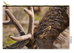 Carry-all Pouch featuring the photograph Young One by Colleen Coccia
