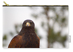 Harris's Hawk Carry-all Pouch