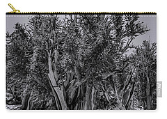Ancient Bristlecone Pine Carry-all Pouch