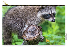 Carry-all Pouch featuring the photograph Baby Racoon by Paul Freidlund