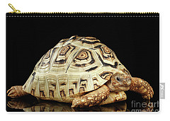 Closeup Leopard Tortoise Albino,stigmochelys Pardalis Turtle With White Shell On Isolated Black Back Carry-all Pouch