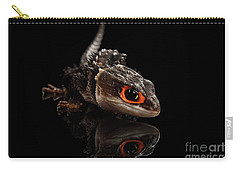 Closeup Red-eyed Crocodile Skink, Tribolonotus Gracilis, Isolated On Black Background Carry-all Pouch by Sergey Taran