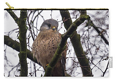 Common Kestrel Carry-all Pouch