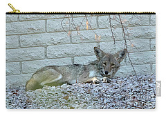 Carry-all Pouch featuring the photograph Coyote by Anne Rodkin