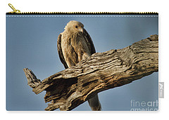 Curious Carry-all Pouch by Douglas Barnard